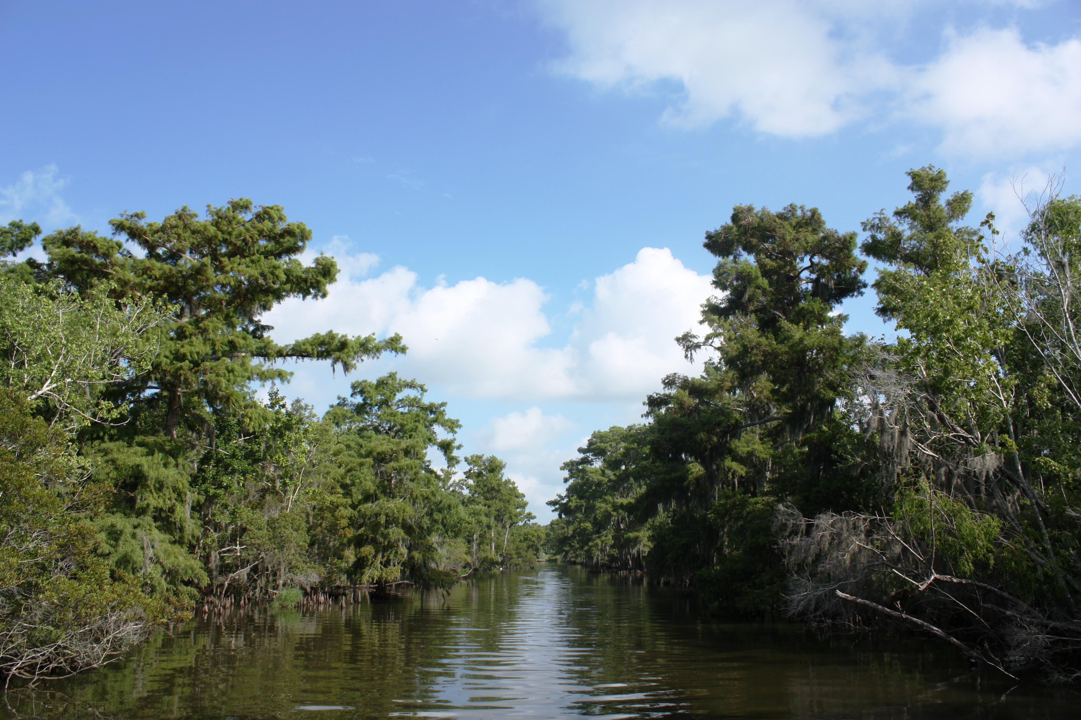 Swamp Tours Terrebonne Parish